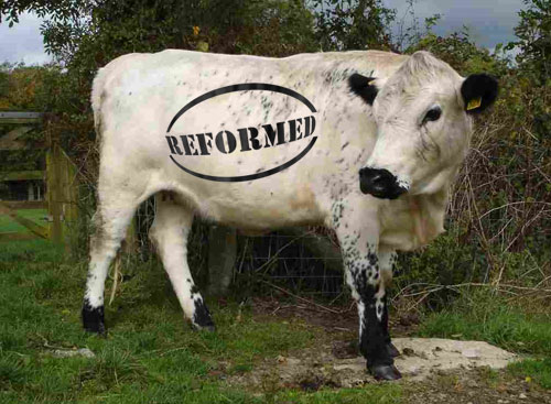 CAP Reform Cow