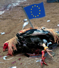 Dead chicken with an EU flag