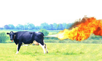Cow Fire